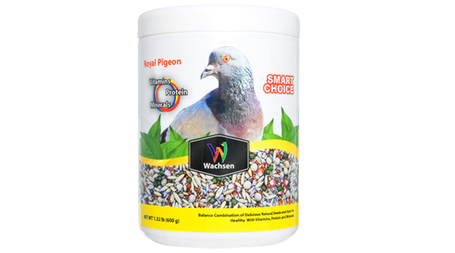 RoyalPigeon Web